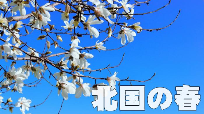 1507iwatenoharu